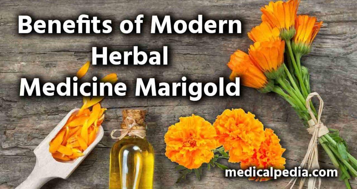 Benefits of Modern Herbal Medicine Marigold